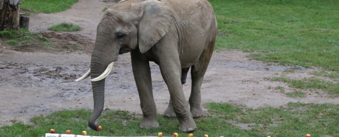 Elefant gegen Investor: Wer baut das beste Depot?